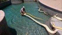 Il remplie sa piscine avec des serpents géants