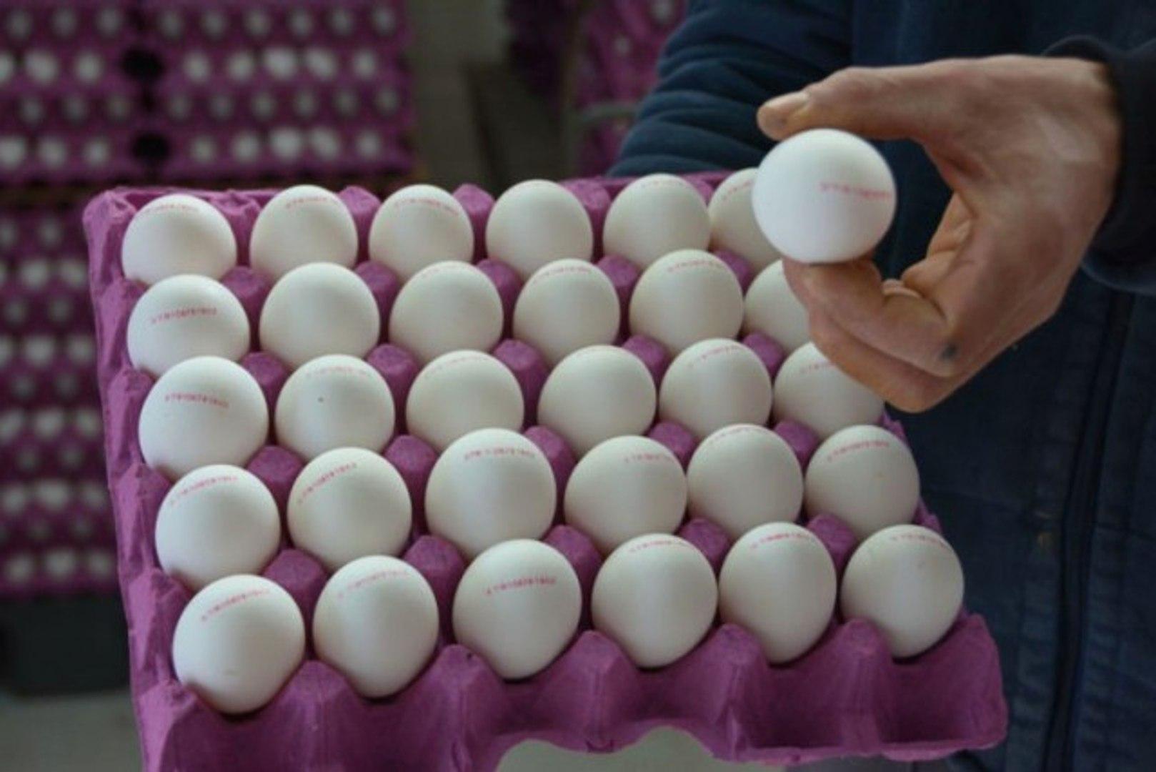 Yumurta Üreticilerinden İndirim Uyarısı: Herkesin Makul Karla Satması Gerekiyor