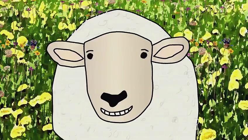 Film Sheep