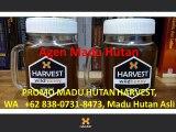 OBRAL MADU HUTAN HARVEST, WA   +62 838-0731-8473, Jual Madu Hutan Asli