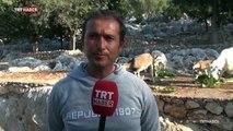 Antalya Aşırlı Adası'nda sadece yaban keçileri yaşıyor