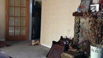 Husky Came, Husky SANG, Husky Left! - Dramatic Dog!