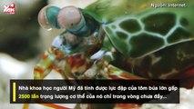 """Chuyên đề: Thiên Nhiên Cận Cảnh: 3 """"võ sĩ"""" cực nhanh và có sức công phá mạnh khủng khiếp nhất thế giới động vật"""