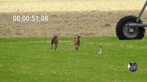Greyhound VS Hare racing 2:02 minutes, the hare wins