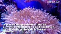 Total est autorisé à forer à proximité d'un récif corallien unique au monde