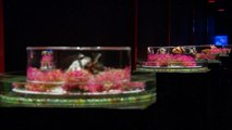 Shanghai Art Aquarium celebrates Japanese culture