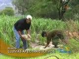 LLUVIAS AFECTAN CULTIVOS - HUANTA