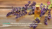 Les huiles essentielles indispensables de l'automne !