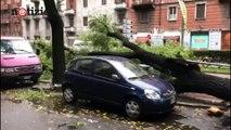 Milano,  alberi caduti sulle auto causa maltempo: automobilisti illesi | Notizie.it