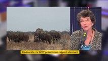 """""""Tout le monde sait qu'aujourd'hui dans son jardin on voit moins d'oiseaux, on ne les entend plus chanter"""" fait remarquer Isabelle Autissier, présidente du WWF France"""