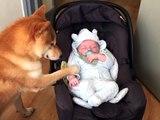 Une vidéo trop mignonne avec un chien qui prend soin d'un petit bébé
