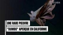 Les images rarissimes d'une pieuvre parapluie au large des côtes californiennes