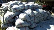 Balıkesir Burhaniye İlaç Sanayine 'Şeker Otu' Üreten Merkez Oldu