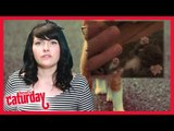 Caturday with heat's Anna Lewis - Episode 7
