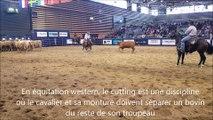 Démonstrations d'attelage et de cutting à l'Equita Longines à Lyon