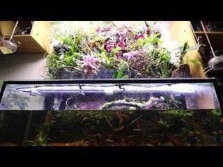Steven Baker's Borneo Biotope