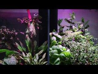 Something completely different: Brio 35 aquarium