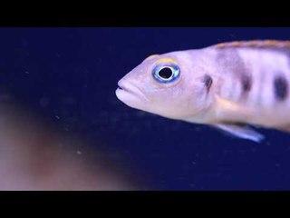 PFK Shoptour: Fishkeeper Melville