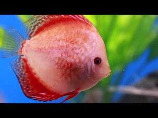 PFK Shoptour: Fishkeeper Livingston