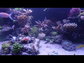 PFK visit Simon Randall's Reef