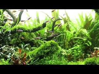 Thang To's Nature Aquarium