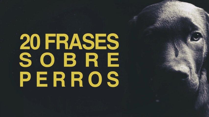 20 Frases De Perros Los Mejores Amigos Del Hombre