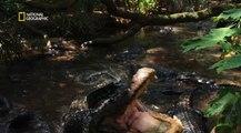 Destination Wild - Floride : Au royaume des alligators (Documentaire animalier)
