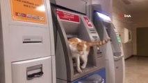 Atm'ye Çıkan Sevimli Kedi İlgi Odağı Oldu