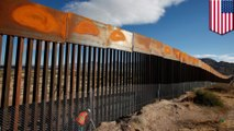 Trump's border wall could threaten wildlife and plants
