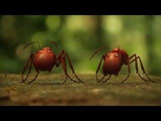 Minuscule - Romeo & Antiet / Roméo & fourmi (Season 2)