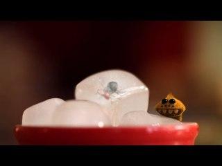 Minuscule - Refrigerated / Frigo (Season 2)