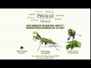 NEW : THE TEASER OF THE NEW FILM MINUSCULE