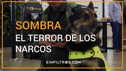 Sombra, el terror de los narcos | Sinfiltros.com