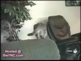 ANIMAUX-HUMOUR-Droles de chats 2 - Funny cats two