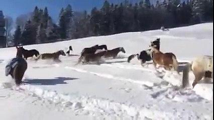 Konji u snijegu
