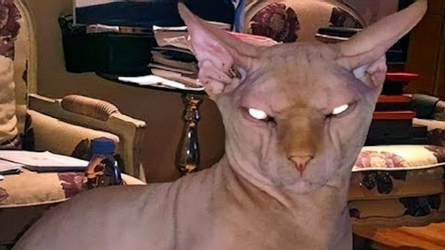ياسمين عبد العزيز تشتري أغلى قط في العالم وترعب الجمهور بصورته!