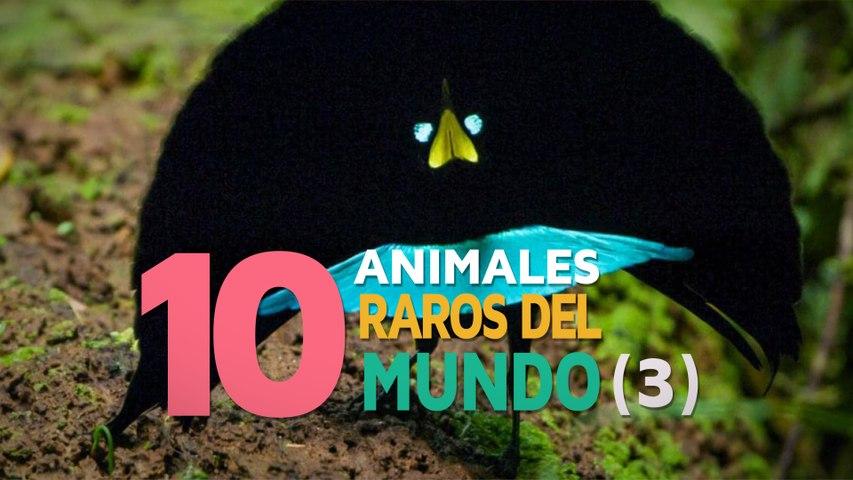 10 Animales raros del mundo   Fascinantes y curiosos 3