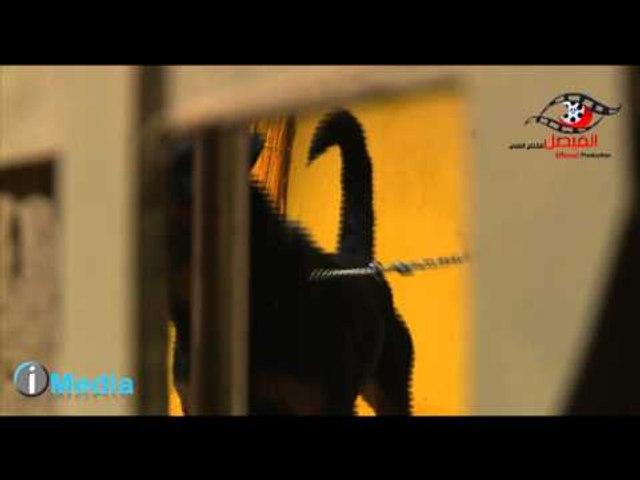 Al Serdab Bloopers / برنامج السرداب - لقطات غريبة - كلب يعض علاء مرسى فى الأستوديو