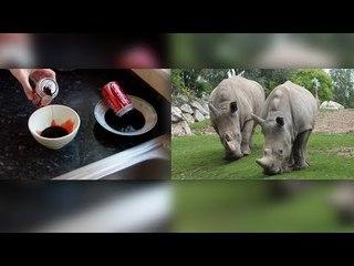 كوكا كولا والدم البشرى مادة حارقة و وحيد القرن يعالج الضعف الجنسى ٫٫ حقائق علمية صادمة