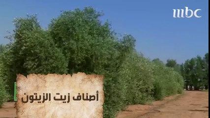 ياسا والبارقي يزورون مزرعة الزيتون في الجوف