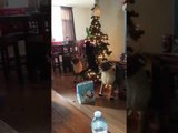 Cat Tips Over Christmas Tree