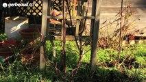 Tuto jardinage : Comment bien tailler un rosier buisson