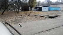 Les chats affamés ont peur de moi. Je me suis éloigné. Les chats ont commencé à manger. [La vie de chat dans la rue].