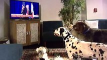 trump-chiens-assis