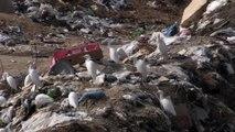 İsrail çevre kirliliğini Gazze halkına karşı silah olarak kullanıyor - GAZZE