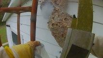 Il détruit un énorme nid de frelon. Impressionnant