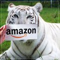 Are you shopping on Amazon this holiday season? Check out Amazon.com/bigcatrescue for unique gifts