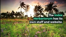 What is INDEX HERBARIORUM? What does INDEX HERBARIORUM mean? INDEX HERBARIORUM meaning - INDEX HERBARIORUM definition - INDEX HERBARIORUM explanation