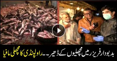 Heaps of stinky fish in freezer