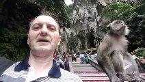 Ce petit singe n'aime pas les selfies